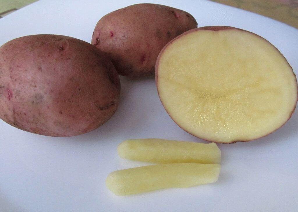 картофельные свечи от гморроя