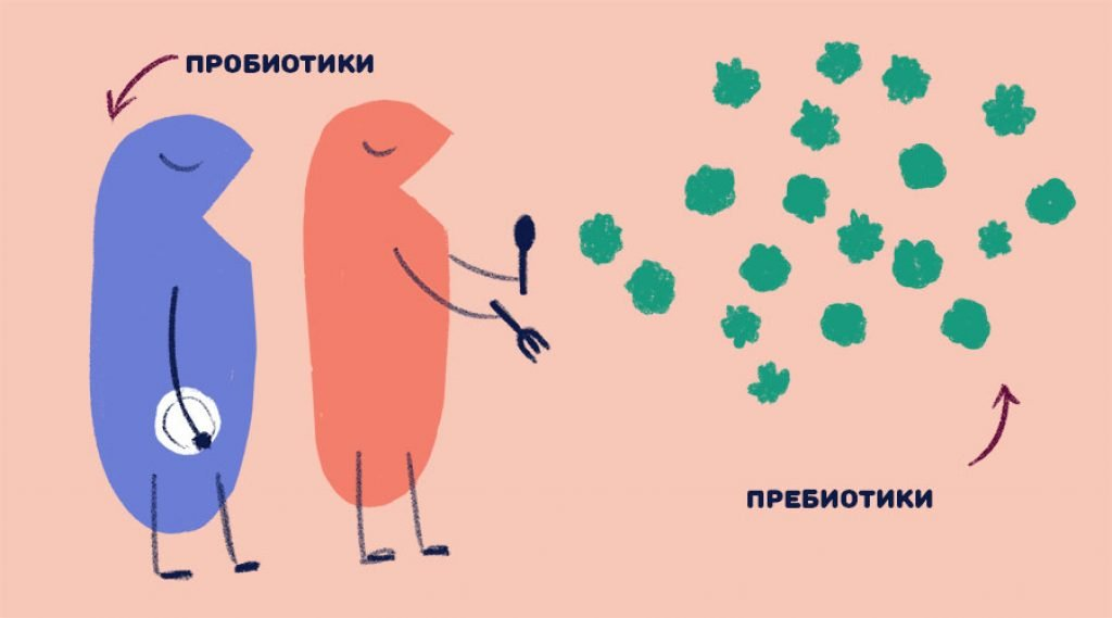 разница между пробиотиками и пребиотиками